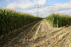 Cornfield. Partly harvested cornfield with power lines in Leeuwarden(Friesland Royalty Free Stock Photo