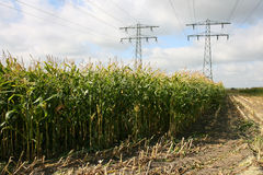 Cornfield. Partly harvested cornfield with power lines in Leeuwarden(Friesland Royalty Free Stock Photography