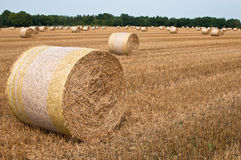 Cornfield. A cornfield with bales of straw in autumn Stock Photo
