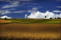 cornfield immagini stock