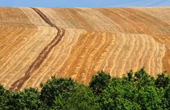 Cornfield. Autumn landscape of arable land Stock Photography