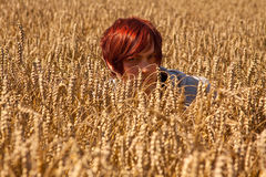 Cornfield. The young man in the cornfield stock images