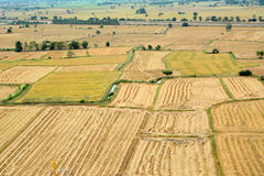 cornfield Imagens de Stock Royalty Free