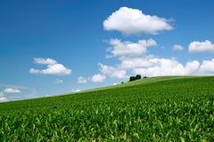 cornfield Stockfotografie