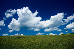 Cornfield. With clouds in slovakia Royalty Free Stock Photography