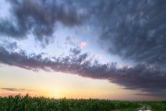 ζωηρόχρωμος ουρανός πέρα από cornfield Στοκ εικόνες με δικαίωμα ελεύθερης χρήσης