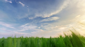 ζωηρόχρωμος ουρανός πέρα από cornfield Στοκ φωτογραφία με δικαίωμα ελεύθερης χρήσης