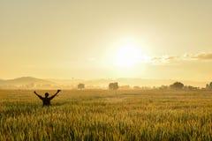 cornfield Lizenzfreies Stockfoto