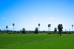 cornfield Royalty-vrije Stock Fotografie