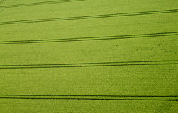 Cornfield, Aerial Photo. Aerial Photo of a cornfield Stock Photo