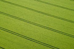 Cornfield, Aerial Photo Stock Photography