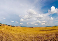 Cornfield afer harvest Royalty Free Stock Photos