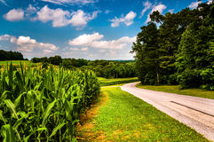 Cornfield along country road in Southern York County, PA Stock Image