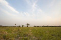 Cornfield arid Stock Images