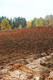 Cornfield in autumn Royalty Free Stock Photos