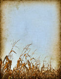 Cornfield Background Royalty Free Stock Image