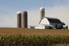 Cornfield with a barn and silos Stock Photography