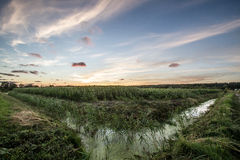 Cornfield bij zonsondergang stock foto