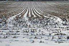 Cornfield in de winter Royalty-vrije Stock Foto's