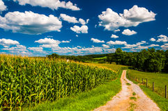 Cornfield and driveway to a farm in rural Southern York County, Royalty Free Stock Photos