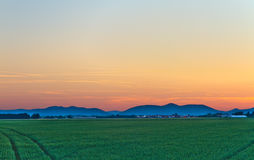 Cornfield at dusk in Pfalz. Germany Stock Photos