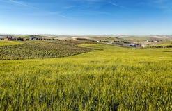 Cornfield en wijngaarden Stock Foto