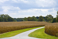 Cornfield Entrance Stock Photo