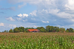 Cornfield with Farm. This image shows a cornfield with farm in Northern Germany royalty free stock photography