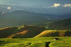 Cornfield. Fresh terrace rice field over the mountain range and beautiful sunset Stock Image