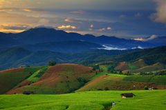 Cornfield. Fresh terrace rice field over the mountain range and beautiful sunset Royalty Free Stock Photos