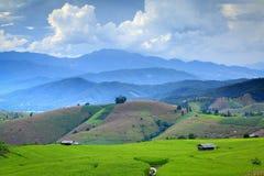 Cornfield. Fresh terrace rice field over the mountain range and beautiful sunset Royalty Free Stock Photo