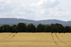 Cornfield in front of Taunus Royalty Free Stock Image