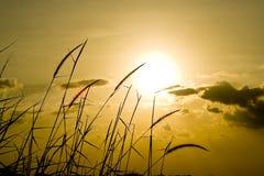 cornfield photographie stock libre de droits
