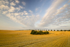 Cornfield after harvest. Field in Poland Stock Images