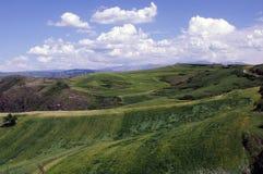The cornfield  on the hillside Stock Photo