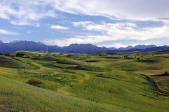 The cornfield  on the hillside Royalty Free Stock Photos