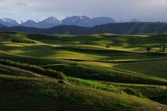 The cornfield  on the hillside Stock Image