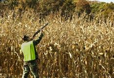 Cornfield hunter Stock Image