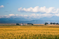 Free Cornfield In Central Colorado, USA Royalty Free Stock Photography - 98653747