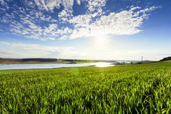 Cornfield and lake before sunset. Time royalty free stock images