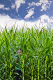 Cornfield and Little boy Stock Image