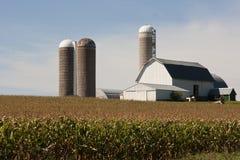 Cornfield met een schuur en silo's Stock Fotografie