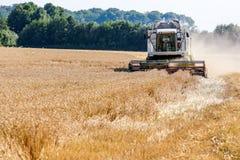Cornfield met tarwe bij oogst Royalty-vrije Stock Afbeelding