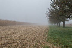 Cornfield mist and rainy day Stock Images