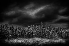Cornfield in moonlight, Oswestry, Shropshire, England Royalty Free Stock Photos
