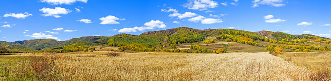 cornfield and mountain forest in the autumn Royalty Free Stock Image