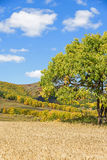 cornfield and mountain forest in the autumn Stock Photo