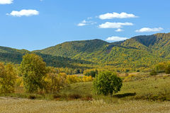 cornfield and mountain forest in the autumn Stock Images