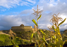 Cornfield near the ruins of the Inca fortress Ingapirca, Ecuador Stock Photo