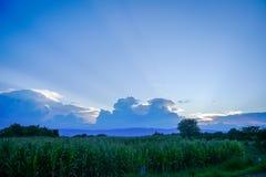 Cornfield på solnedgången Fotografering för Bildbyråer